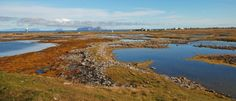 Deler av strandengkomplekset i Røstlandet naturreservat. Foto: Mia Marthinus Husdal