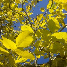 Kica Bijoux: Jesień