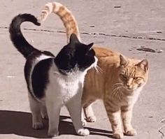 I Love Cats, Cute Cats, Cute Cat Gif, Fotojournalismus, Photo Chat, Cat Aesthetic, Cute Little Animals, Pretty Cats, Funny Animals