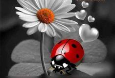 I'm Pansy Tattoo, Bug Tattoo, Mother Nature Tattoos, Daisy, Forest Mural, Cute Bear Drawings, Ladybug Art, Sunflower Wallpaper, Flower Phone Wallpaper