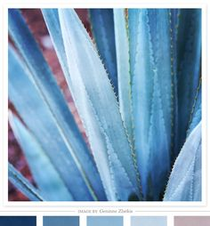 Agave Azul photograph by Geninne Zlatkis | shared on Creature Comforts blog