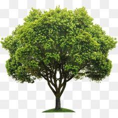 나무,나무 Photoshop Rendering, Photoshop Design, Landscape Architecture, Landscape Design, Tree Photoshop, Mask Images, Plant Art, Flower Wallpaper, Fruit Trees