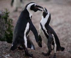 Conheça 20 animais que correm risco de extinção - Superinteressante