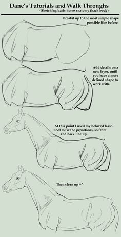 Sketching a Horse Body by AgerskovArt on DeviantART