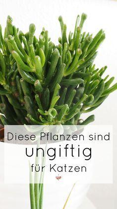 Diese Pflanzen sind ungiftig für Katzen. Bedenkenlos die Wohnung mit ungiftigen Zimmerpflanzen verschönern. #UrbanJungle #Pflanzenliebe #Pflanzenfreude