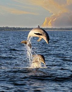 Dauphin Island. You WILL see dolphins.