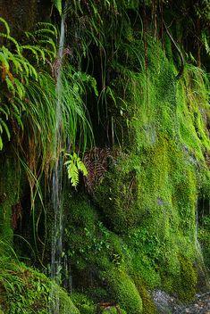 yaku island Moss