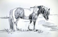 Icelandic Horse - Na d'Onofrio - 1/16 Pencil and Graphite wash