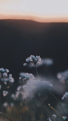 Flower Wallpaper for Sytle Your New iPhone's Home Screen is a very simple iPhone application that makes the most of the iPhone's default background image and then lets you rearrange it how you want. It includes a few different screen… Continue Reading →