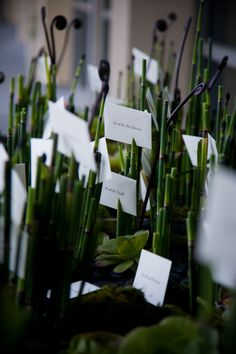 Horsetail reed escort card table:  Bella Celebrations and Asiel Design