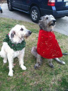 Can be found on Facebook as :  Greene Wolfhound Adventures  https://www.facebook.com/alieandbodhi?ref=hl