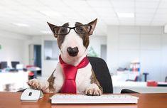 dog training,teach your dog,dog learning,dog tips,dog hacks Office Dog, The Office, Brain Training, Dog Training, Cheap Pets, Dog Travel, Therapy Dogs, Dog Hacks, Puppy Pictures