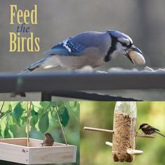 Feed the Birds: 10 Homemade Bird Feeders @Spoonful What birds visit your backyard?