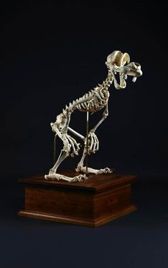Skeletons of Famous Cartoon Characters