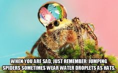* Haha. Definitely NOT a spider lover at ALL but this is cute