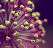 lime green and purple design - Recherche Google