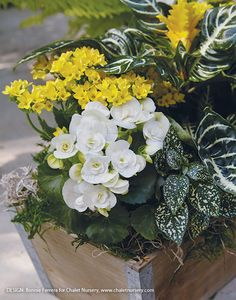 Tabletop Planter Ideas: These tabletop planters may be small, but their colorful flowers and foliage can make a big impact on your outdoor living area. Flower Containers, Flower Planters, Flower Pots, Small Flowers, Colorful Flowers, Dried Flowers, Best Plants For Shade, Shade Plants, Bellis Perennis