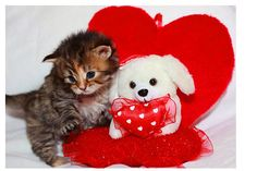 most adorable thing i have ever seen :) Happy Valentines Day Pictures, Valentines Day Cat, My Funny Valentine, Kittens And Puppies, Cats And Kittens, I Love Cats, Crazy Cats, Cat Hug, Best Valentine's Day Gifts