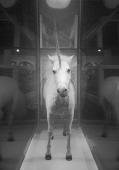 Imprisoned baby unicorn... Let's set It free!