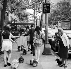 A dachshund watching little Shih Tzus go by. Photograph by Yale Joel. New York City, June 1969.