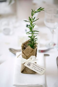 Pretty plant {Photographer: Calli B Photography} Plant Wedding Favors, Wedding Favours Luxury, Wedding Favors Cheap, Wedding Reception Lighting, Wedding Reception Photography, Herb Wedding, Baby Wedding, Bomboniere Ideas, Herb Bouquet