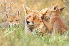 This Photographers Work Will Change the Way You View Wild Foxes