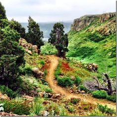 Trail Running: North Table Mountain