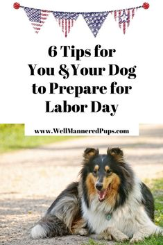 Six tips to help you and your dog prepare for Labor Day! Dog Training Courses, Dog Training Tips, Dog Labor, Prepare For Labor, Stop Dog Barking, Easiest Dogs To Train, Boxer Puppies, Dog Fighting, Dog Hacks