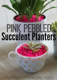 Pink Pebbled Succulent Planters for a fun POP of color! This would work great for outdoor pots as well. Aquarium stones come in almost any color.