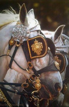 Gorgeous horses ✿⊱╮