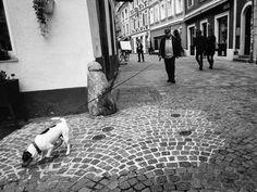 long leash by fotoschalk