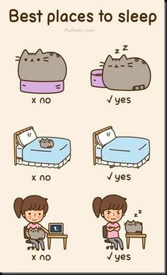 Pusheen's best places to sleep.