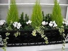 Winter Window Boxes - Bing images