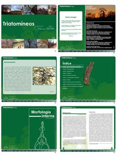Triatomíneos on Behance