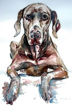 Weimaraner, A3 pencil and watercolour on paper