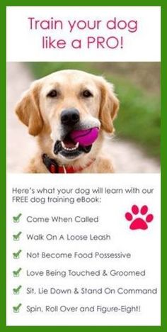 Dog Training Made Easy - Read This Great Advice! | Dog Training ** Want to know more, click on the image. #DogTraining