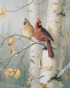 Wildlife art prints plus original paintings with a wide . Pretty Birds, Beautiful Birds, Cardinal Birds, Kinds Of Birds, Bird Artwork, Cross Paintings, Original Paintings, Bird Drawings, Bird Pictures