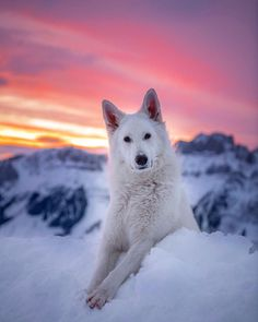 Magical shot love the perspective here! Cutest dog ever! Puppy Care, Pet Puppy, Dog Cat, German Shepherd Pictures, German Shepherd Dogs, German Shepherds, White Shepherd, Animals And Pets, Cute Animals