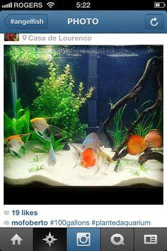freshwater aquarium idea