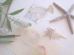 drawings by Mari Mochizuki, July 2014/スタジオから:季節の便り 2014年7月 ハワイで描いたフグの素描と、桃の素描を用いた構成 #望月麻里 mochizukimari.com