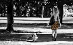 5つのお泊りマナーを知って、愛犬と一緒に旅行に行こう! | 犬の情報マガジンドッグトレンド DogTrend