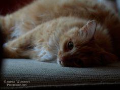 Sleepy Sunday by Garden Windows Photography