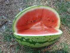 How to Grow Watermelons on a Trellis