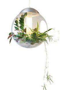 Hängende Gärten für die Wohnung? Kein Problem! #zimmerpflanzen #garten