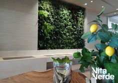 The amazing #verticalgarden made for Sani Dunes! Technology of Jardines Verticales Paisajismo Urbano