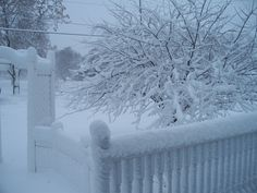 Outside my backdoor this snowy morning. What a beautiful snow!