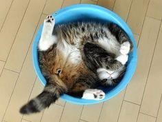 A cat lying head first in a blue bucket.