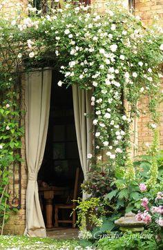 rosier grimpant à pétales blanches pour égayer une entrée plutôt austère