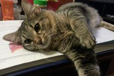 """""""23 Cats Who Demand That You Take a Study Break Right Now"""""""