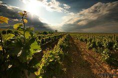 El vino chileno, la belleza de sus Viñedos.  Google Image Result for http://www.chilebbtour.cl/images/vinedo.jpg